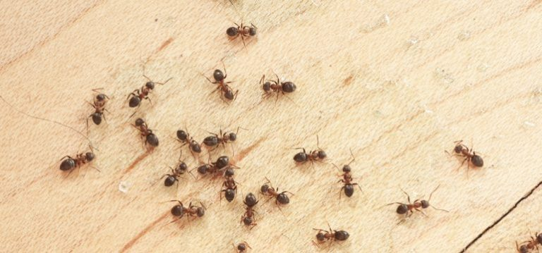 Ant Free Home